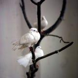 białe gołębie Fotografia Royalty Free