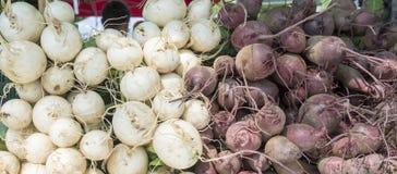 Białe i purpurowe rzepy dla sprzedaży przy miejscowym wprowadzać na rynek obrazy stock
