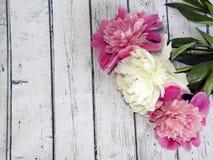 Białe i różowe peonie na drewnianym stole, malowniczy tło Obrazy Stock