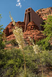 Białe jukki kwitnie przy kaplicą Święty krzyż w Sedona Zdjęcie Stock