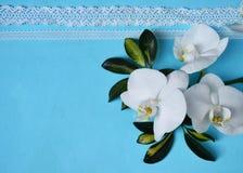 Białe koronki na błękitnym tle i orchidee obrazy royalty free