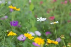białe kwiaty żółty zdjęcie stock
