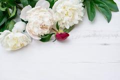 Białe peonie na białym drewnianym tle Odbitkowa przestrzeń, odgórny widok Obrazy Royalty Free