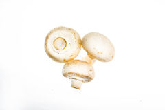 Białe pieczarki na białej tło pieczarce, biel, tło, odizolowywający, szampinion, cięcie, łasowanie, jadalny, jedzenie Zdjęcie Stock
