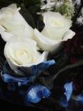 białe róże Obrazy Royalty Free