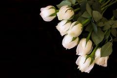 białe róże Obraz Stock