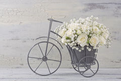 białe róże Fotografia Stock