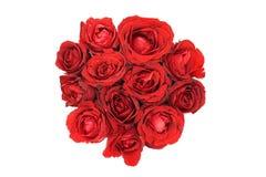 białe róże czerwone tło Zdjęcia Stock