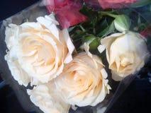 Białe róże, kwiaty Obrazy Royalty Free