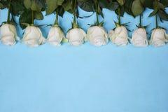 Białe róże lokalizować w linii na błękitnym tle zdjęcia stock