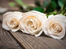 Białe róże na ciemnym drewnianym tle Kobieta dzień, walentynka Fotografia Royalty Free