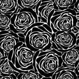 Białe róże na czarnym tle royalty ilustracja