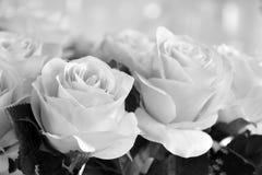Białe róże robić płótno ale wybitny piękno fotografia stock