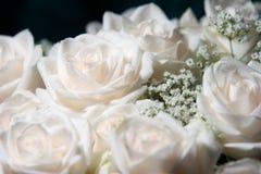 białe róże rosie obrazy stock