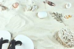Białe skorupy i piasek tło denna plaża pionowo widok, w górę i tło z skorupami crustaceans zdjęcie stock