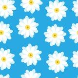 Białe stokrotki na błękitnym tle Zdjęcia Royalty Free