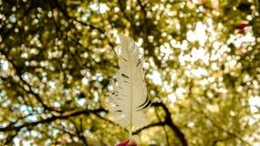 Białego łabędź piórkowy i zamazany drzewny tło zdjęcia stock