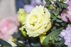 Białego kolor żółty róży kwiatu abstrakcjonistycznego tła bokeh makro- płatki Obrazy Stock