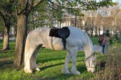 Białego konia pasanie w miasto parku zwycięstwo Obrazy Stock
