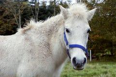 Białego konia pozycja na trawie obraz stock