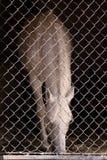 Białego konia pozycja w stajence robić zdjęcia stock