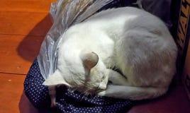 Białego kota szczęśliwy dosypianie na sukiennym plastikowym worku pod lampy światłem Obraz Stock
