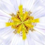Białego kwiatu centrum kolażu Geometryczny wzór Zdjęcie Royalty Free
