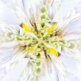Białego kwiatu centrum kolażu Geometryczny wzór Zdjęcia Royalty Free