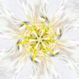 Białego kwiatu centrum kolażu Geometryczny wzór Obrazy Royalty Free