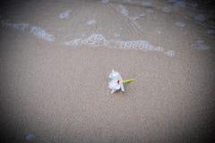 Białego kwiatu plaża Fotografia Stock