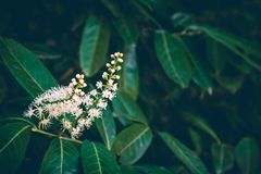 Białego kwiatu zieleni i gałąź liście zdjęcia royalty free