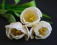 Białego tulipanu bukieta okwitnięcia inskrypcji zieleni wiosny matek dnia natury dekoracji makro- ciemny bukiet obrazy stock