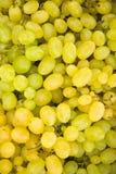Białego winogrona jagod tło (Vitis) Zdjęcia Royalty Free