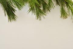 Białej sosny konary obramia wierzchołek imahge z białym tłem Udziały przestrzeń dla kopii obraz royalty free