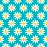 Białej stokrotki chamomile ikona Śliczna kwiat rośliny kolekcja pojęcia dorośnięcie Bezszwowy Deseniowy Opakunkowy papier, tkanin ilustracja wektor