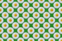 Białej stokrotki kwiatów wzór royalty ilustracja