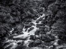 Białej wody strumień śpieszy się nad głazami w Fiordland Nowa Zelandia z textural roślinnością w czarny i biały Zdjęcie Stock