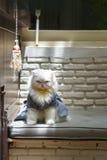 Białogłowy kot siedzący w złym nastroju obrazy stock