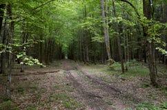 Białoruś Drzewa w terytorium Belovezhskaya Pushcha Maj 23, 2017 fotografia royalty free