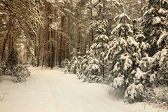 Białoruś, Grodno, Śnieżny czarodziejski las wokoło Molochnoe jeziora fotografia stock