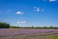 Białoruskie łąki zdjęcie royalty free