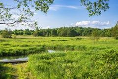 Białoruskie łąki zdjęcie stock