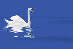 Biały łabędź fotografia stock