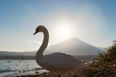 Biały łabędź z odbiciem Fuji góra przy jeziornym Yamanaka przy fotografia stock