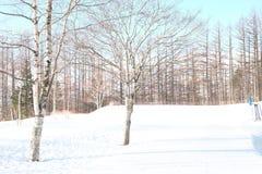 Biały śnieg w Sapporo Fotografia Stock