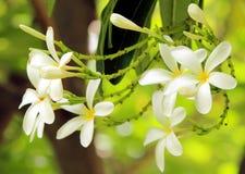 Biały Żółty zieleń liść i kwiat Obrazy Royalty Free