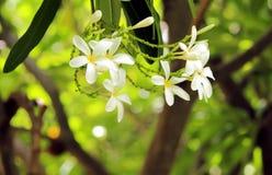 Biały Żółty zieleń liść i kwiat Zdjęcia Royalty Free