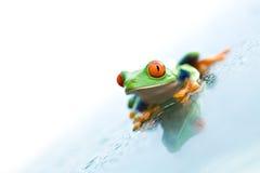 biały żabę szklanki Zdjęcie Royalty Free