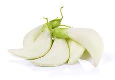 Biały Agasta, Tajlandzki warzywo na białym tle Zdjęcia Stock