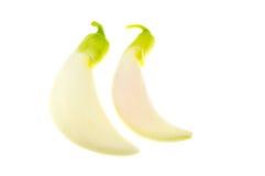 Biały Agasta, Tajlandzki warzywo odizolowywa na białym tle Zdjęcie Royalty Free